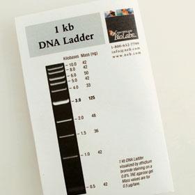 1 kb DNA Ladder - 200 gel lanes