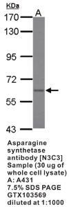 Anti-MPP3 Rabbit Polyclonal Antibody