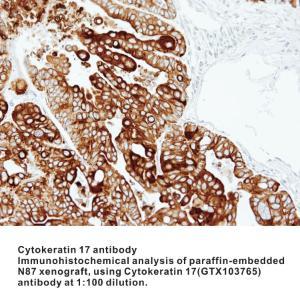 Anti-JNK1 Rabbit Polyclonal Antibody