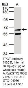 Anti-LIPG Rabbit Polyclonal Antibody