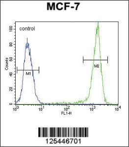 Anti-SGMS2 Rabbit Polyclonal Antibody