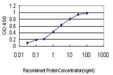 Anti-MPHOSPH6 Mouse Monoclonal Antibody [clone: 1D8-2A8]
