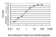 Anti-PSMD14 Mouse Monoclonal Antibody [clone: 4A10-E8]