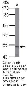 Anti-CAT Rabbit Polyclonal Antibody
