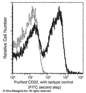 Anti-CD22 Rabbit Monoclonal Antibody (PE (Phycoerythrin)