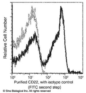 Anti-CD22 Rabbit Monoclonal Antibody (APC (Allophycocyanin)