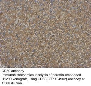 Anti-FH Rabbit Polyclonal Antibody