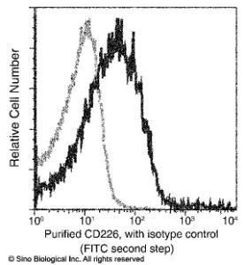 Anti-CD226 Rabbit Monoclonal Antibody (APC (Allophycocyanin)