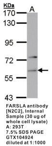 Anti-FCGR2A Rabbit Polyclonal Antibody