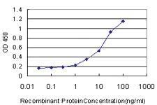 Anti-GDF11 Mouse Monoclonal Antibody [clone: 1000000]