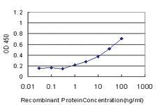 Anti-GDF11 Mouse Monoclonal Antibody [clone: 4F8]