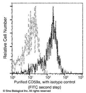 Anti-CD59a Rabbit Monoclonal Antibody (APC (Allophycocyanin)