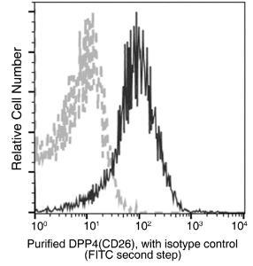 Anti-CD26 Rabbit Monoclonal Antibody (APC (Allophycocyanin)