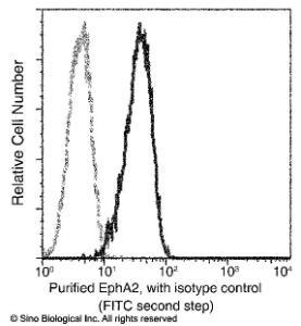 Anti-EphA2 Rabbit Monoclonal Antibody (APC (Allophycocyanin)