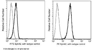 Anti-EphA2 Rabbit Monoclonal Antibody (PE (Phycoerythrin)