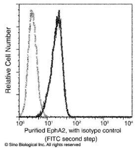 Anti-EphA2 Rabbit Monoclonal Antibody (FITC (Fluorescein Isothiocyanate)