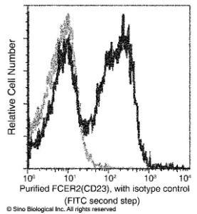 Anti-CD23 Rabbit Monoclonal Antibody (APC (Allophycocyanin)