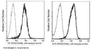 Anti-KDR Rabbit Monoclonal Antibody (PE (Phycoerythrin)