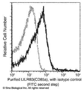 Anti-LILRB3 Rabbit Monoclonal Antibody
