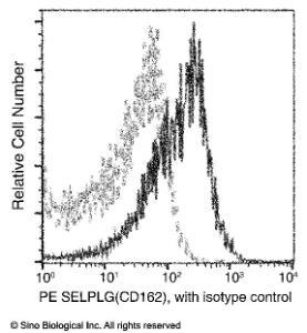Anti-PSGL-1 Rabbit Monoclonal Antibody (PE (Phycoerythrin)