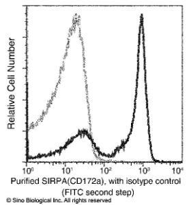 Anti-SIRPA Rabbit Monoclonal Antibody (APC (Allophycocyanin)