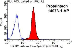Anti-SRPK1 Rabbit Polyclonal Antibody