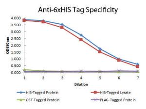 Anti-6x-His Epitope Tag Monoclonal Antibody - Western Blot