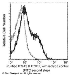 Anti-ITGA5 & CD29 Heterodimer Mouse Monoclonal Antibody (PE (Phycoerythrin)) [clone: 05]