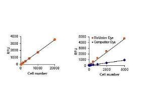 Cell Proliferation Assay Kit Fluorometric, BioVision
