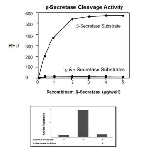 Beta-Secretase Activity Assay Kit, BioVision