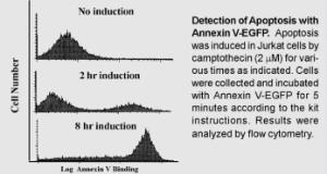 Annexin V-Egfp Apoptosis Kit, BioVision