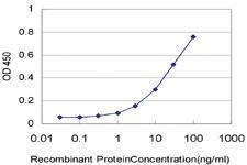 Anti-HRSP12 Mouse Monoclonal Antibody [clone: 2B8]