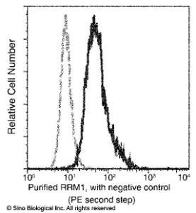 Anti-RRM1 Mouse Monoclonal Antibody [clone: 08]