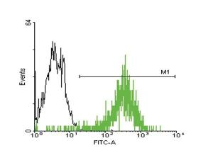 Anti-STIP1 Mouse Monoclonal Antibody [clone: 20]