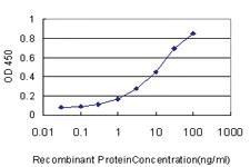 Anti-IRX5 Mouse Monoclonal Antibody [clone: 8A12]