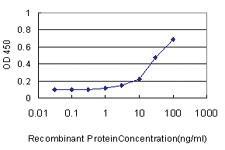 Anti-SPEG Mouse Monoclonal Antibody [clone: 2C2-2C7]