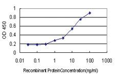 Anti-DEF6 Mouse Monoclonal Antibody [clone: 1F2]