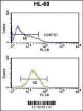 Anti-NR1I2 Rabbit Polyclonal Antibody
