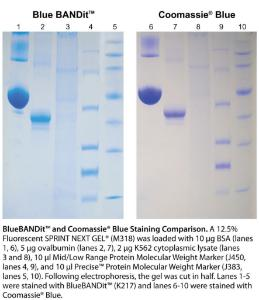 VWR Life Science Blue Bandit™ Protein Stain