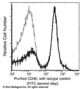Anti-Anti-CD40 Antibody Mouse Monoclonal Antibody [clone: 01]