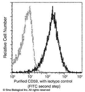 Anti-CD59 Rabbit Monoclonal Antibody [clone: 001]
