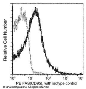 Anti-TNFRSF6 Rabbit Monoclonal Antibody (PE (Phycoerythrin)) [clone: 028]