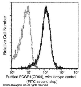 Anti-CD64 Rabbit Monoclonal Antibody [clone: 005]