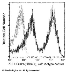 Anti-CD32A Mouse Monoclonal Antibody (PE (Phycoerythrin)) [clone: 04]