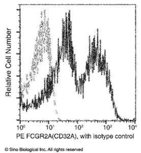 Anti-CD32A Rabbit Monoclonal Antibody (PE (Phycoerythrin)) [clone: 043]