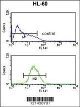 Anti-ATF7 Rabbit Polyclonal Antibody