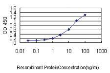 Anti-DNAJB4 Mouse Monoclonal Antibody [clone: 1H2-3G4]