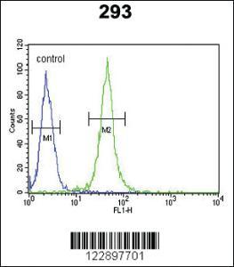 Anti-FOXC1 Rabbit Polyclonal Antibody