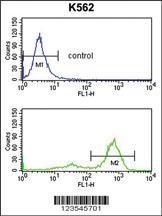 Anti-ETV6 Rabbit Polyclonal Antibody