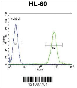 Anti-SLC8A1 Rabbit Polyclonal Antibody